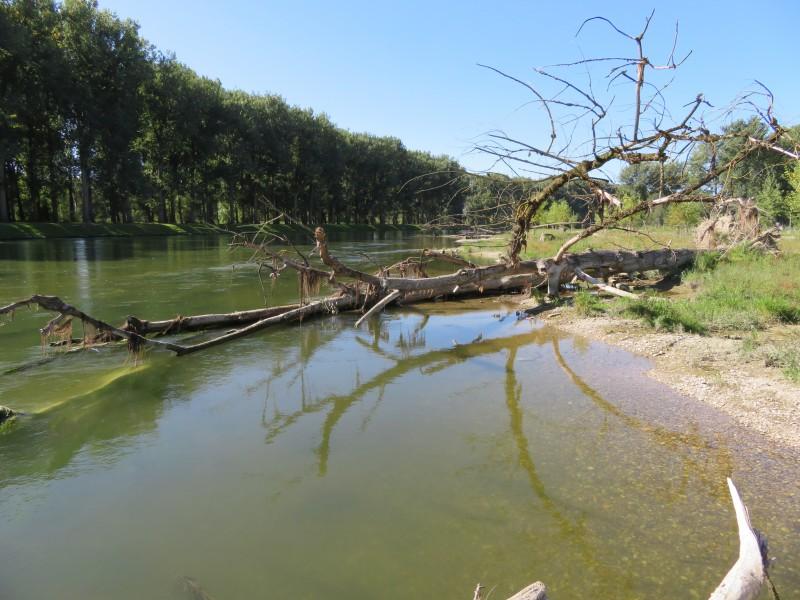Totholz im Mündungsgebiet der Isar